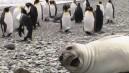 Fotoğraf Çekilenleri Trolleyen Hayvanlar