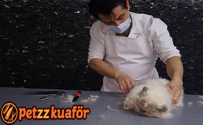 Pet Sektöründe Pet Kuaför Hizmeti